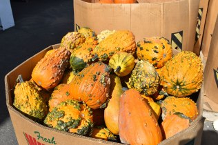 oct-2016-fall-pics-006-pumpkins-gourds