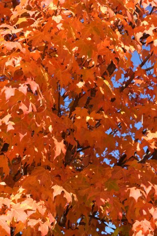 oct-2016-fall-pics-078-fall-leaves